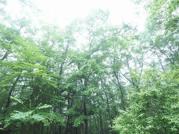 周囲は森に囲まれ静かな軽井沢らしい雰囲気です。家の周りは開けてますので、陽当りも良好です。
