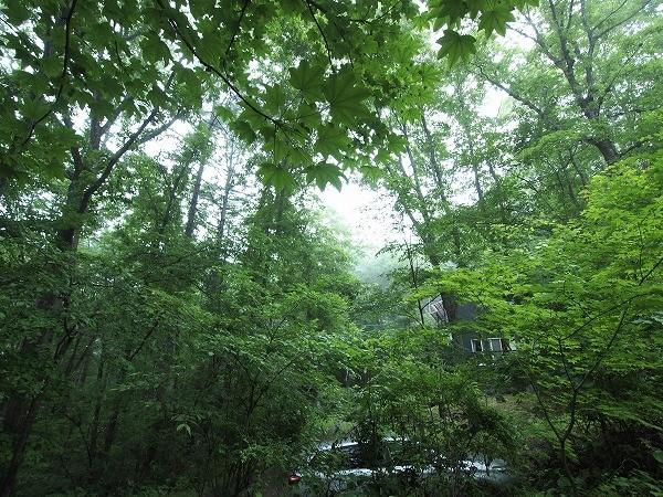 春夏秋冬それぞれ美しい姿を見せる軽井沢の森の名で過ごしてみませんか。