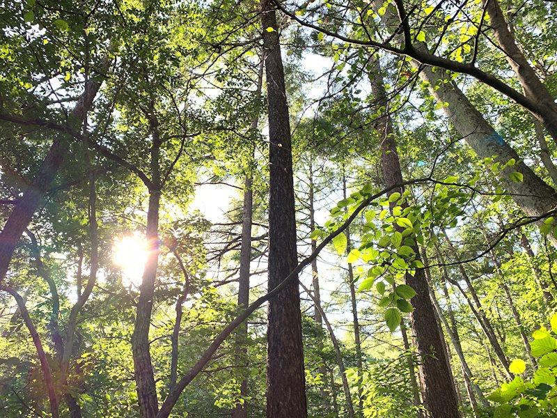 広葉樹が多く、新緑や紅葉など、季節の移ろいが楽しみです。