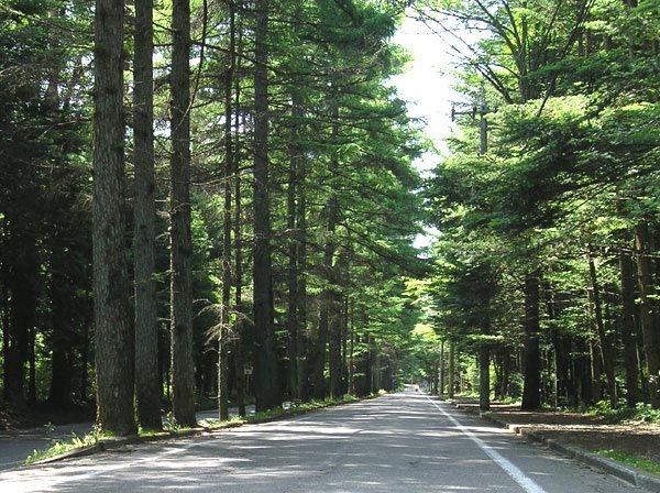 軽井沢の代名詞である松並木も近くです。