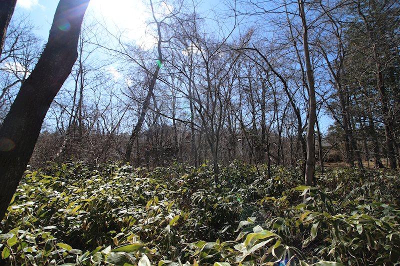 葉がつく季節には緑に囲まれることでしょう。