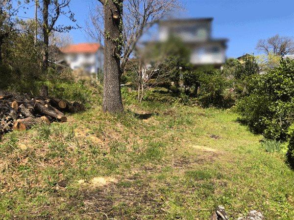 現状はまだクヌギの木が何本かあります。伐採伐根が必要です。