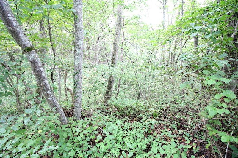 敷地内は軽井沢の緑が広がります。