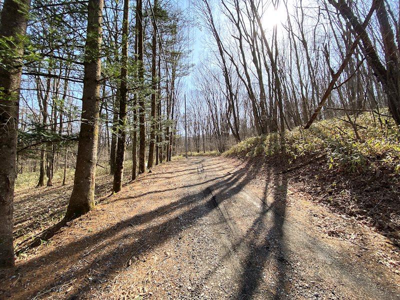 夏は辺り一面緑一色に。森の中で気持ちよくお散歩いただけます。