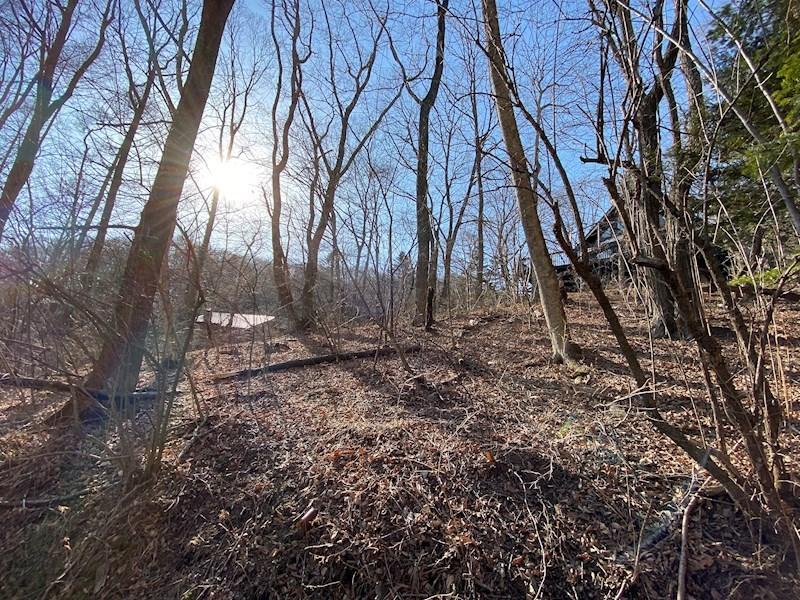 冬は太陽がまぶしい!伐採すれば光を取れる方角に面しています。