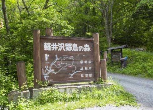 近くには軽井沢野鳥の森があり、小鳥のさえずりが聞こえます。