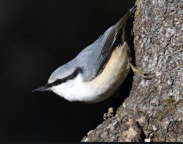 都会では見ない野鳥に癒される日々をお過ごしください