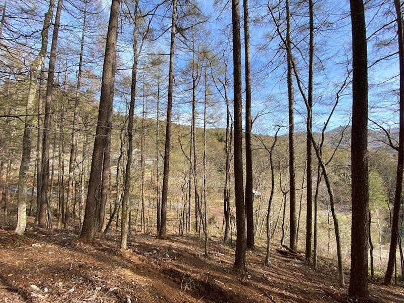 木の雰囲気も良く、森に囲まれた別荘にすることも出来そうです。