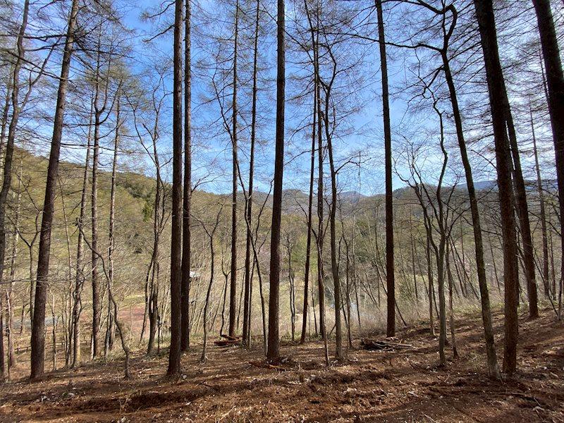 景色を優先して、木を間引いてお好みの空間を作りませんか?