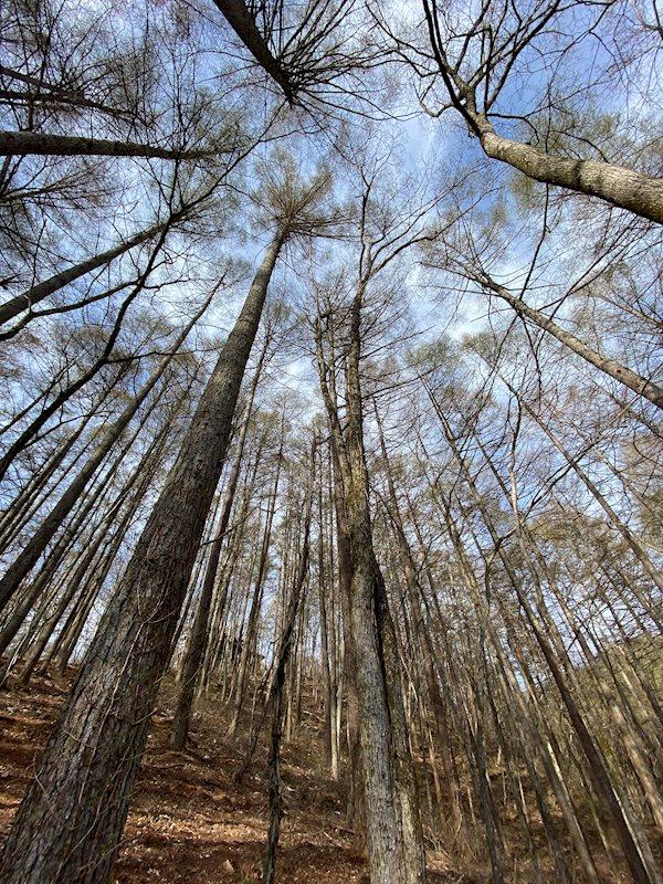 豊かに育っている木々が別荘ライフを一層充実させてくれます。