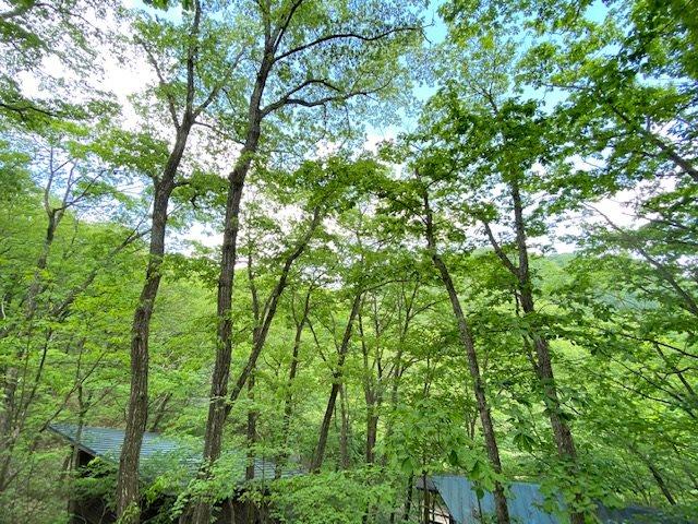 ウッドデッキから眺める借景は、季節通して楽しめる環境です!イメージが膨らむロケーションですね!