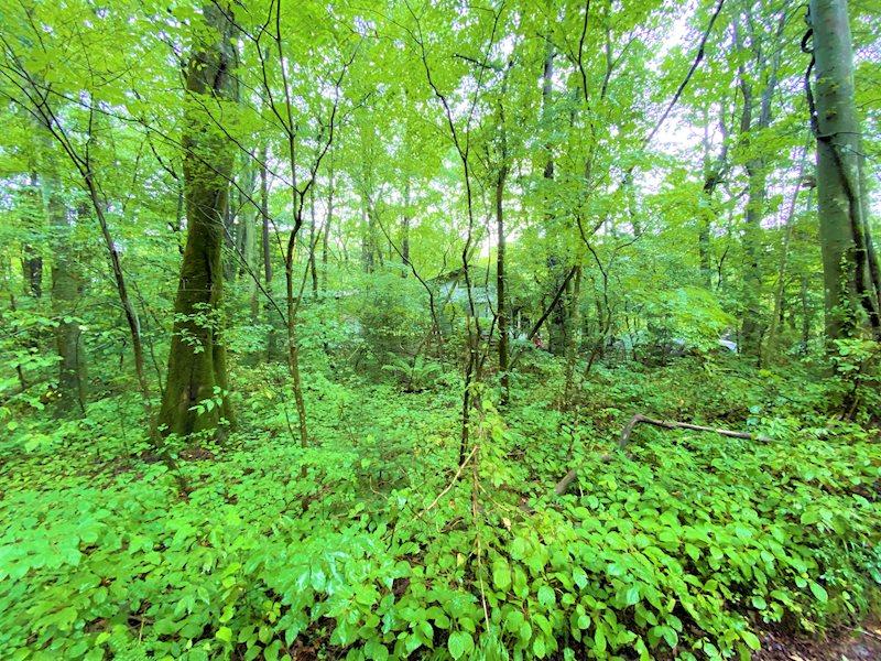 緑が多く軽井沢らしい環境ですね。