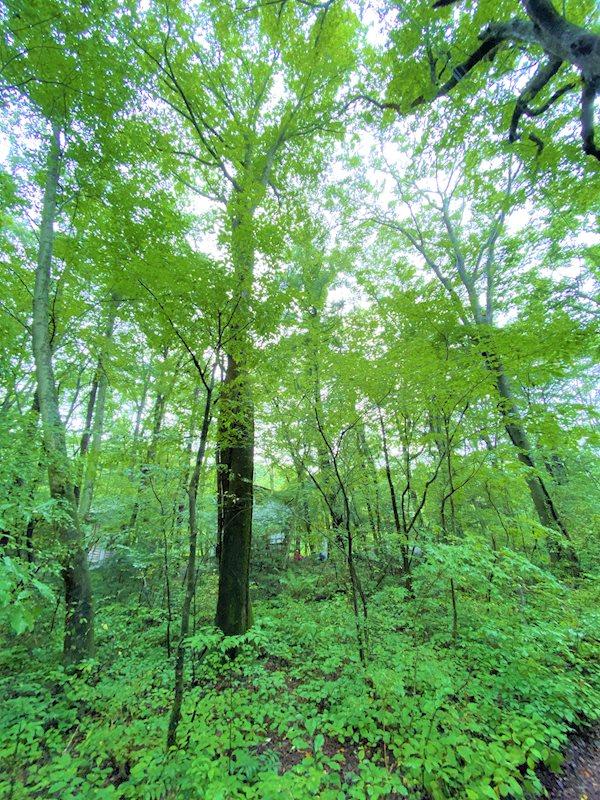 見事に育った木々が豊かにあります。