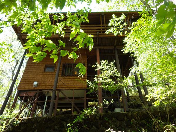 敷地内は自然の宝庫。高原の木々が彩りを与えてくれます。