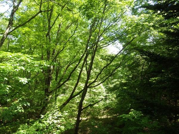 ベランダからの眺望です。緑あふれる環境です。