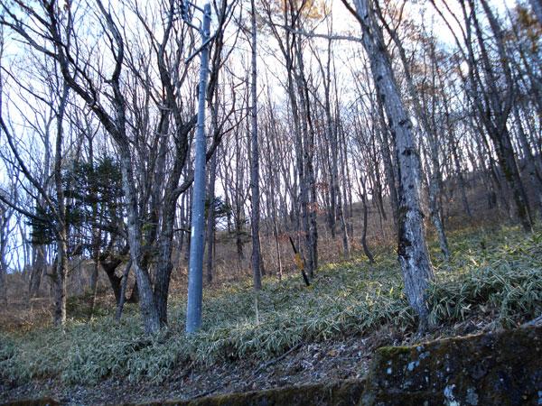 後方に四季を彩る木々、眼前には浅間山。自然に包まれた閑静な立地です。ぜひお確かめください。