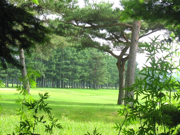 近隣にある72ゴルフ場。気軽に行ける距離がうれしいですね。
