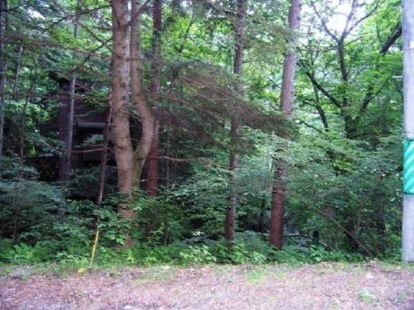 モミ、カラマツ、ナラの大木が繁っています。真夏でも涼しい緑木陰。