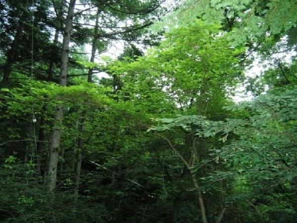 真夏の強い日射しも深い緑で遮ってくれます。