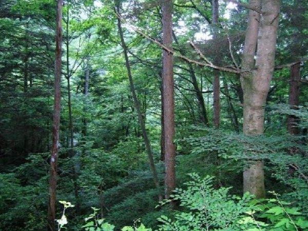 静寂と木立に囲まれる環境です。