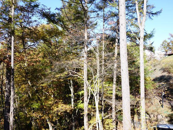 木々を間引くと前方には浅間山の雄姿が顔を出します。