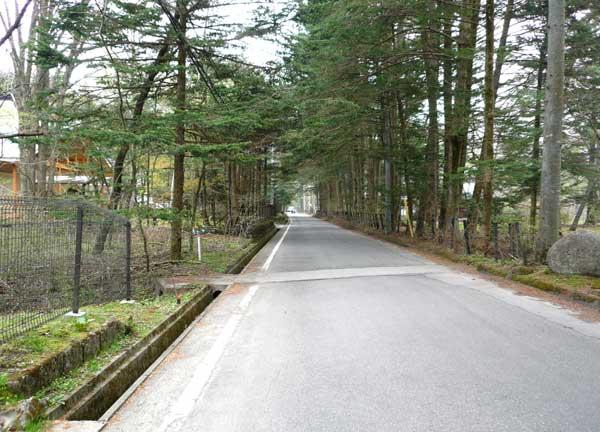 接道はひろびろとした安心の舗装道路。並木の間を抜けてお出かけ。
