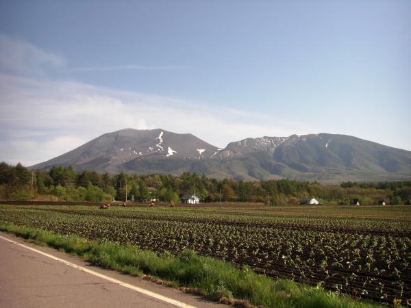 近くのキャベツ畑の先に雄大な浅間山が見えます。