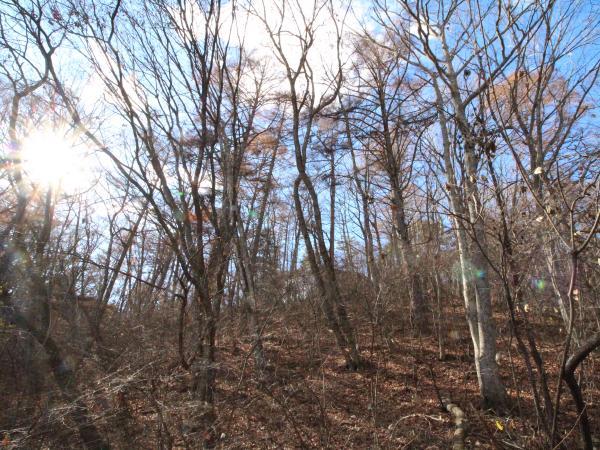 斜面は木々が多いので自然を感じられます。
