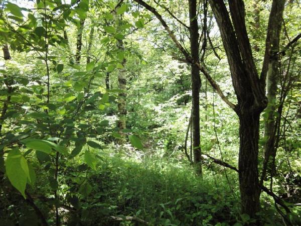 木々の大きさが、別荘地の歴史を物語っています。