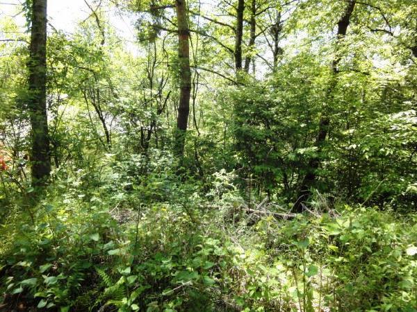 樹木を切ると、現地からは南東側の眺望が開けます。