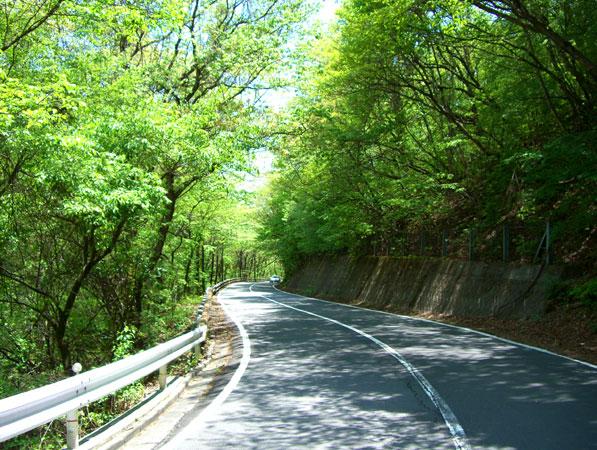 緑のトンネル国道146号線を通って現地に向かいます。