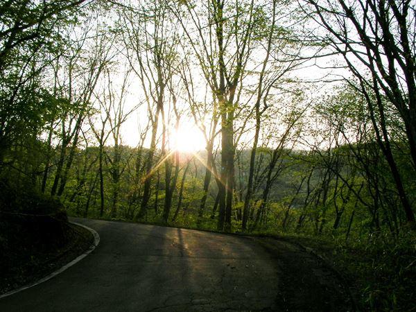 新緑に沈む夕日です。5/20撮影