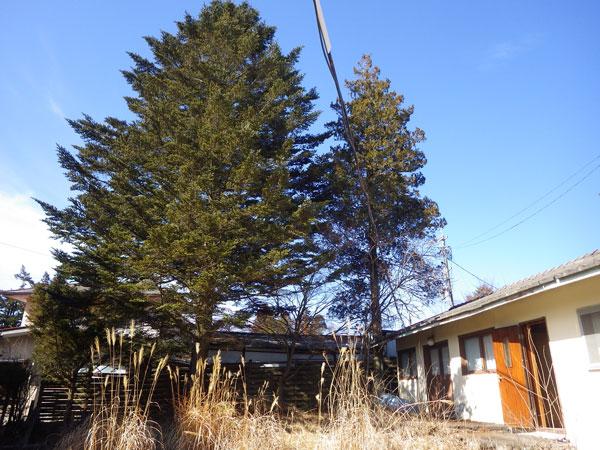 緑豊かな環境なので、お好きな木を残して建築していただけます。