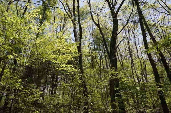 広葉樹の多い敷地内