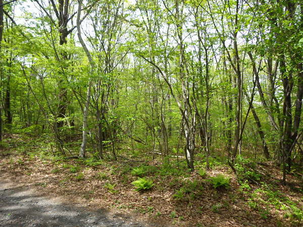 木々に囲まれる敷地です。道路面と平坦な土地です。