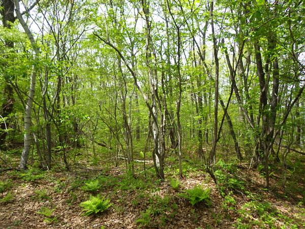 草木を伐採してお好きな木を残し建築するのが良さそうです。