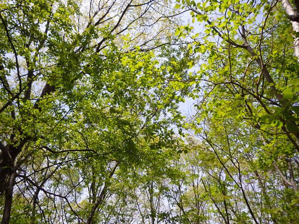 広葉樹、針葉樹 多種な木々に囲まれた好環境です。