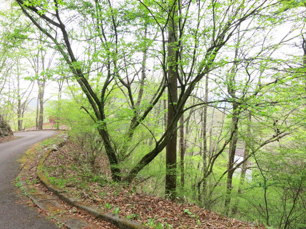 敷地内には、針葉樹林が生い茂り、遠くの山並みがご覧いただけます。