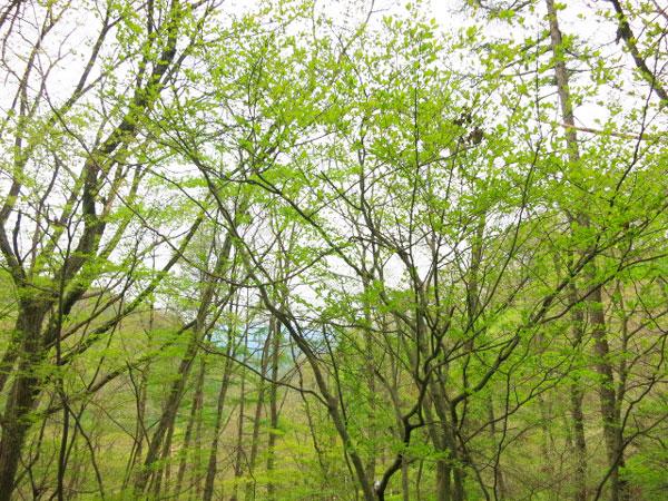 「観音通り(かんのんどおり)」に面した土地です。当別荘地においても、最も見晴らしがいいですね。