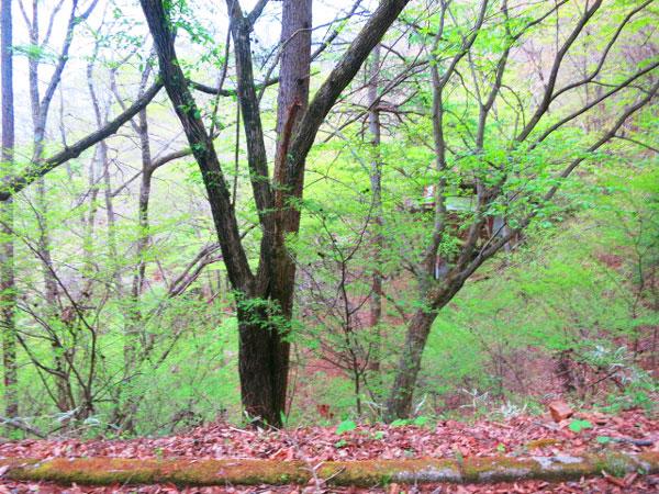 北側接道からの様子です。生息する木々たちと共存しませんか。