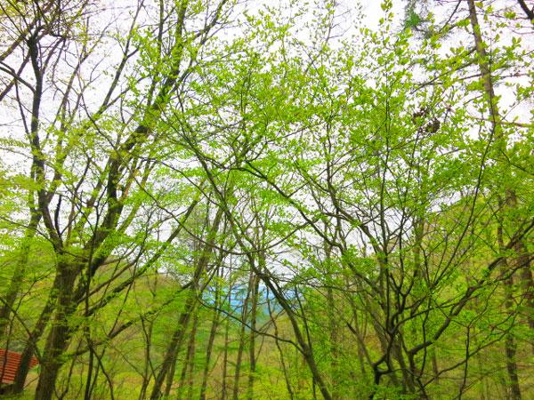 遠くの山並みに、只々感動を覚えました。自然の偉大さに、心が洗われます。