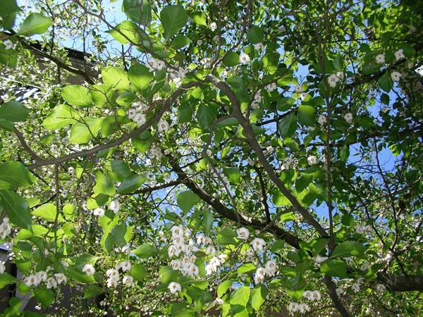 新緑のレイクニュータウン。木漏れ日の優しい光。