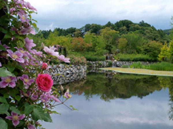 バラと湖の美しい光景。毎日がロマンチック。