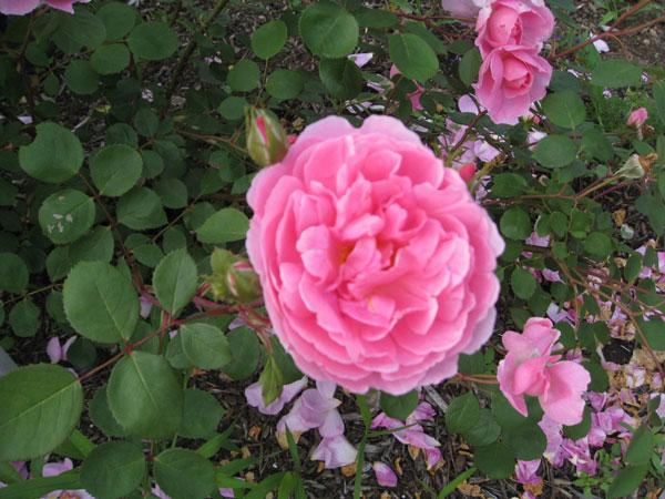美しい花々に囲まれて、おいしいお食事を頂けるなんて、まるで楽園です。