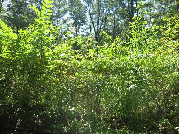 敷地内の大きな木は伐採済みです。