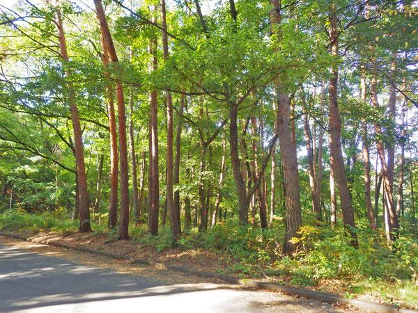 敷地東側からの撮影です。大きな木立も立派に育っています。