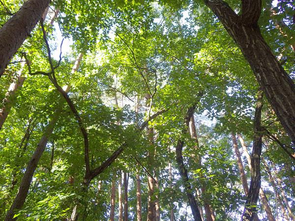 立派な木々の隙間から木漏れ日が差し込みます。