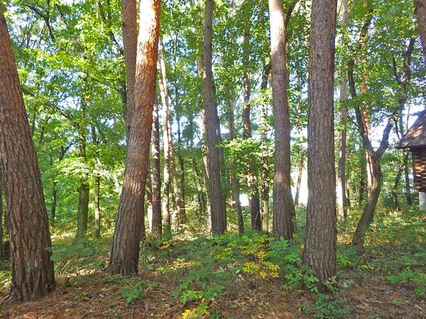 木々の中で森林浴を楽しめます。