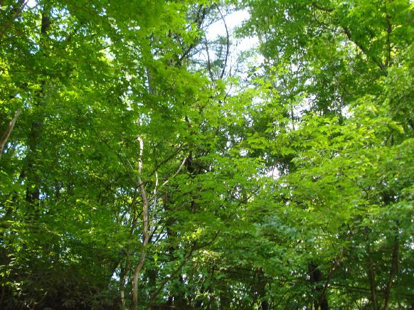 物件のご様子:白樺の木も生えており軽井沢らしい景色が広がります