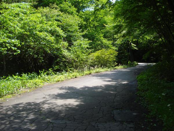 前面道路の様子①:南側道路です。緑に囲まれた自然豊かな環境です